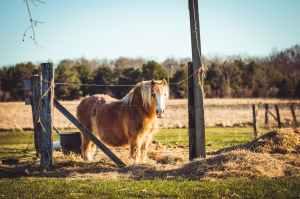 photo of brown shetland pony on field